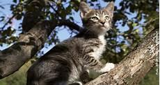 Freigang F 252 R Die Katz Tierische Tipps