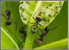 hausmittel gegen ameisen im garten hausmittel gegen ameisen im garten garten house und