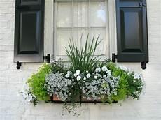 balkonkästen bepflanzen ideen balkonkasten idee bepflanzung duftsteinrich lobularia