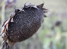 Vertrocknete Pflanzen Retten - vertrocknete pflanzen rettung in letzter sekunde pflege