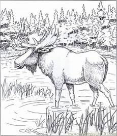 wood animals coloring pages 17194 pin by valrie on coloring coloring pages animal coloring pages coloring