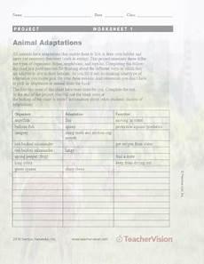 animal adaptations worksheets 2nd grade 13792 animal adaptations project worksheet 1 teachervision