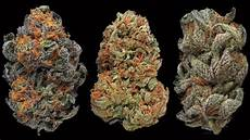weedmaps oz specials az 100 half s on all pr more at dispo on delivery weedmaps