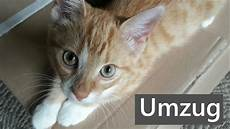 umzug mit unsere kleine katze