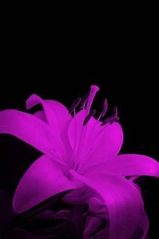 iphone purple flower wallpaper flower mobile phone wallpapers hd phone wallpapers