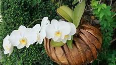 Menakjubkan 30 Gambar Bunga Anggrek Liar Galeri Bunga Hd