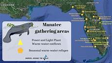 Uhrzeit In Florida - manatees in florida facts where to see information and