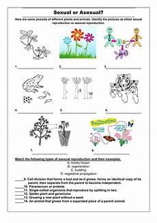 animal reproduction worksheets for grade 5 14018 b3a worksheet 3 dna