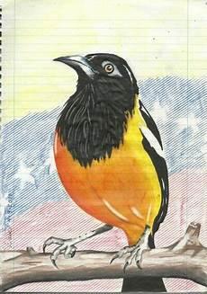 dibujos de el turpial turpial by daniel sojo dibujos tumblr dibujos