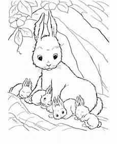Tierbaby Ausmalbilder Ausmalbilder Zum Drucken Malvorlage Kaninchen Kostenlos 1