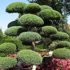 L Du Niwaki Comment Tailler Les Arbres Et Arbustes