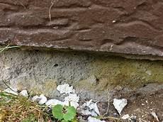 Hauswand Br 246 Ckelt Feuchtigkeit Ungeziefer Was Tun Beton