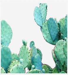 aesthetic cactus iphone wallpaper aesthetic cactus wallpaper iphone free transparent png