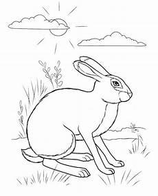 Ausmalbild Hase Und Igel Hase Und Igel Ausmalbilder Malvor