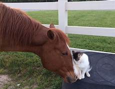 animale vanitoso tiny cat has been best friends with his since he was