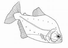 Fische Malvorlagen Zum Ausdrucken Ebay Sch 246 Ne Ausmalbilder Malvorlagen Fische Ausdrucken 4