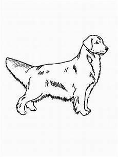 Ausmalbilder Hunde Golden Retriever Hund Golden Retriever Ausmalbild Malvorlage Hund