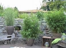 pflanzen sichtschutz ganzjahrig sichtschutz aus pflanzen