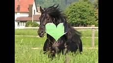 ausmalbilder pferde rassen die 10 sch 246 nsten pferderassen