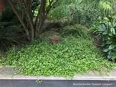 couvre sol sans entretien le secret d un jardin sans entretien in my garden