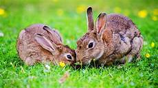 animaux de la ferme les animaux de la ferme le lapin