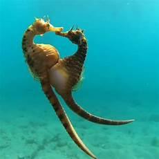 Unterwasser Tiere Malvorlagen Instagram Oceanholic On Instagram One Of The Most Beautiful