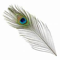 bg peacock eye tails fly tying materials feathers