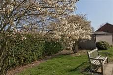 kupfer felsenbirne 187 pflanzen pflegen schneiden und mehr