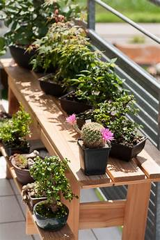 sommer auf dem balkon bonsai auf dem balkon