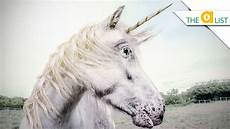 why don t we unicorns today this ballsy 5 true facts about unicorns