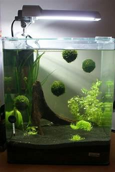 nano aquarium 30l nano cube 30l page 2