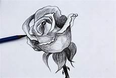 disegni di fiori a matita io disegno di fiori a matita foto stock 169 wongchai1972