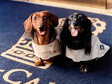 pered pooches pet friendly luxury hotels travel channel