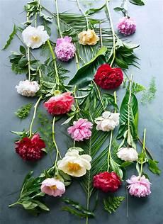 fiori di giugno paeonia fiore mese di giugno