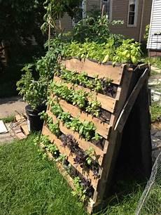 Small Market Gardening As A Career Wvxu
