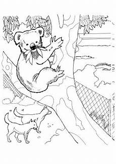 ausmalbilder koala im zoo koalas malvorlagen