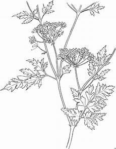 Malvorlagen Blumen Mit Gesicht Schematische Blume Ausmalbild Malvorlage Blumen