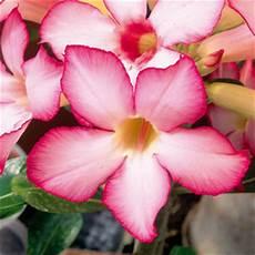 nomi di fiori esotici giardini