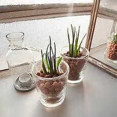 erde oder hydrokultur hydrokultur f 252 r zimmerpflanzen geeignete hydropflanzen
