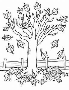 maple tree worksheet education