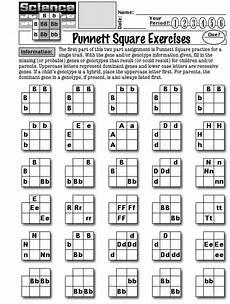 15 best images of punnett square worksheet answer key