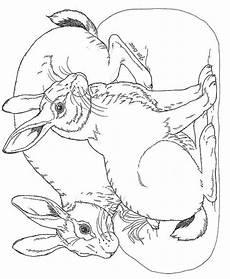 malvorlagen osterhase und ig zeichnen und f 228 rben