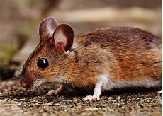 Mäuse Im Haus - m 228 use ace zydek