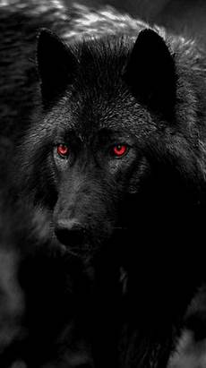 supreme wolf wallpaper free wallpapers zedge