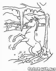 Malvorlagen Spirit Der Wilde Mustang Malvorlagen Spirit Der Kleine Mustang