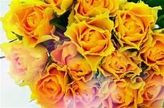 Gambar Putih Latar Belakang Kuning Kertas Kaca Jeruk