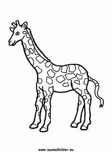 ausmalbilder giraffe gratis 1039 malvorlage giraffe