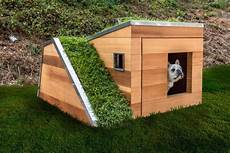 solar powered sustainable dog house with a green roof keeps pups cool