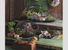 Decor: BUBBLE Glass Modern Terrarium Indoor Garden Planter