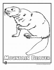 endangered animals coloring pages 16966 endangered mtn beaver woo jr activities